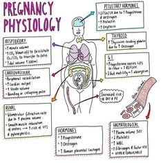 nurse anesthesia, nurse books, nurse make up Newborn Nursing, Ob Nursing, Maternity Nursing, Nursing School Notes, Nursing Schools, Medical School, Pharmacology Nursing, Obstetrics And Gynaecology, Medical Anatomy