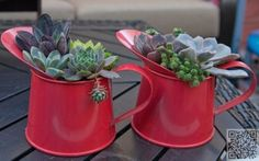 31. #Watering Cans - 43 Outstanding Succulent #Gardens You Can Create at Home ... → #Gardening #Succulent