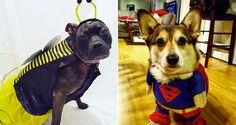 Diese Hunde haben die besten Halloween-Kostüme #News #Unterhaltung
