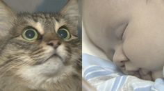 1/15/15  ~ Russian Cat saves baby from freezing...A baby boy not older than 12 weeks has been found in a box on a staircase in an apartment block in the Russian town of Obninsk. The box was meant for a cat, who – after having found a new soul in misery, warmed up the baby and was worried to let him go.