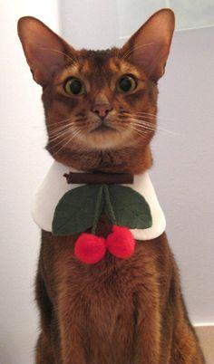 twin cherries tie and round collar cat