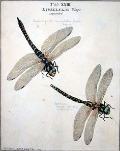 moses harris an exposition of english insects