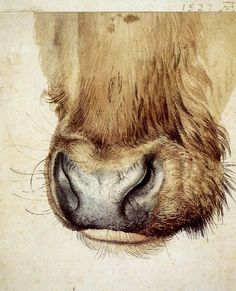 details of durer paintings - Google Search