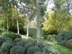 ...Play on colour and texture using Lemon Scented Gums (Corymbia citriodora) with their ghostly grey trunks set amongst the clipped shapes of the Coastal Rosemary (Westringia). French Lavender, Echiums, Helichysums and Teucriums...