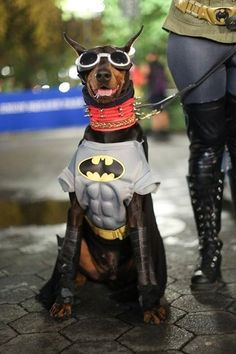 Humans of New York ~ and the canines of New York...