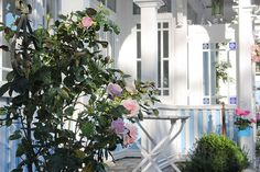 Haus Midsommer, Ferienappartements im Vintage Style, teilweise mit Meerblick Vintage Stil, Shabby Chic, Vintage Fashion, Plants, Style, Roses Garden, House, Swag, Fashion Vintage