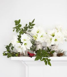 By adding white amaryllis in birch-bark vases you'll be adding a simple spin on Christmas traditions.