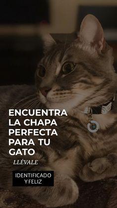 Chapas para Gato originales, perfectas y resistentes. #gatos #gatos graciosos Animals, Licence Plates, Cat Collars, Little Dogs, Sheet Metal, Dog Cat, Originals, Animales, Animaux