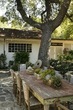 """Beneath an oak that shades the dining patio, a weathered farm table found on a trip to Texas displays succulent-filled troughs. """"It's a favorite place to have lunches and late-afternoon glasses of wine."""" Mary confides."""