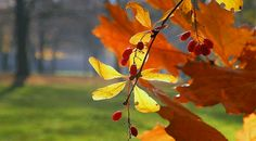 jesien.jpg (615×340)