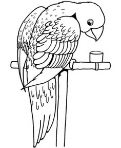 Smiley Parrot Coloring Page For Kids