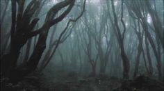 Hoia Baciu forest in Transylvania