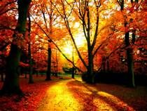 fall images - - Yahoo Image Search Results