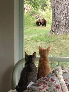 Bear in a backyard in town, with a captive audience - by Robin Wiles