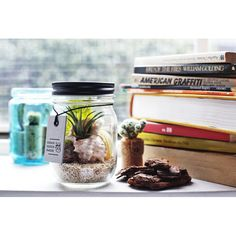 Add a pop of greenery to your home or office space with the Glass Jar Terrarium!