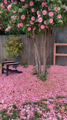 Pink Garden, Dream Garden, Easy Garden, Garden Art, Outdoor Projects, Garden Projects, Outdoor Plants, Outdoor Gardens, Amazing Flowers