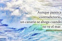 Un canario se ahoga cuando no ve el mar... pic.twitter.com/leROMCcFvz