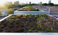 4 Inspiring Urban Rooftop Gardens