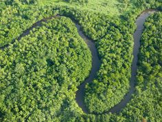Aerial View of the Rainforest on Fiji Photographic Print by Ashley Cooper at AllPosters.com