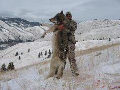 Wolves To 900-Yards Possible For This Rifle & Load! 6