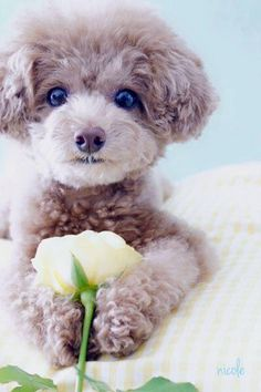 Cute flower lover #dog