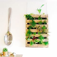 Make this awesome indoor living wall out of an old shipping pallet!