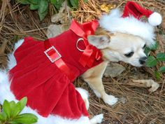 Christmas Chihuahua Dress