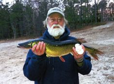 On Feb. Wesley C. Winters landed this chain pickerel while fishing in New York's Deep Pond. It measured in at 62 cm and was caught using a live shiner. Stingray Fish, Hammerhead Shark, Cats, Pond, Fishing, Deep, Live, Gatos, Water Pond