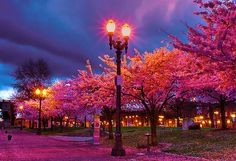 a colorful evening