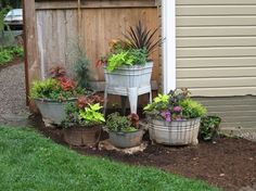 use old rusty tubs, buckets, etc. in a corner of the yard.