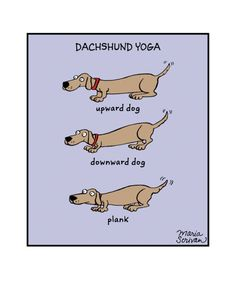 Dachshunds look the same in any pose they do! Museum-quality print made on thick, archival and acid-free matte paper. Printed in America, sweatshop free. Memes Humor, Dog Memes, I Love Dogs, Puppy Love, Cute Dogs, Funny Dogs, Funny Animals, Cute Animals, Upward Dog