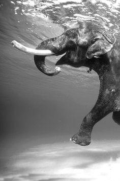 Elephant Under Water