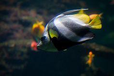 #Nausicaa aquarium, Boulogne Sur Mer, France - www.gdecooman.fr portfolio, cours et stages photo à Lille, visites guidées de Lille.