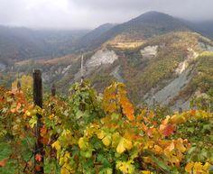 Vineyards near Spigno Monferrato (Piedmont, Italy) ..............  Holiday apartments with jacuzzi in the garden - on the border Piemonte / Liguria (Italy) - www.verdita.com