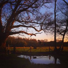 The lopsided gate reflects itself in the freshly filled puddle at its feet, capturing clearing sky. #gate #rain #puddle #view #sight #nostalgic #trees #reflection #mirror #country #countryside #nature #wild #view #scene #peace #romance #beautiful #sunset #bucolic