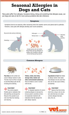Great infographic about pet allergies - causes, symptoms and treatments!