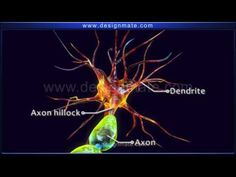 Science - Structure of Neuron - YouTube