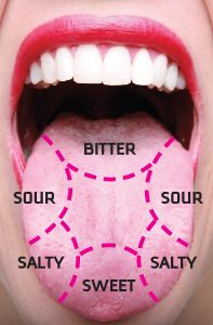 Map of the tongue showing different taste buds