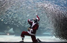 SANTA SWIMS WITH SARDINES IN KOREA