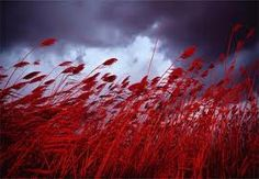 Field of Red.