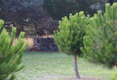 Woodpile Garden, Plants, Garten, Lawn And Garden, Gardens, Plant, Gardening, Outdoor, Yard