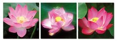 Excited Lotus. Contemporary Art, Modern Wall Decor, 3 Panel Wood Mounted Giclee Canvas Print, Ready to Hang A1142... - List price: $169.00 Price: $69.99