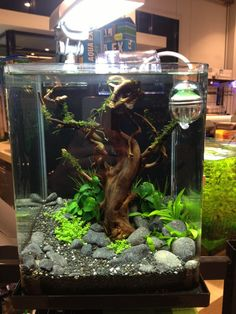 Tips on Aquarium Care and Cleaning Terrariums, Aquarium Terrarium, Planted Aquarium, Tropical Freshwater Fish, Freshwater Aquarium, Tropical Fish, Betta Fish Tank, Aquarium Fish Tank, Goldfish Aquarium