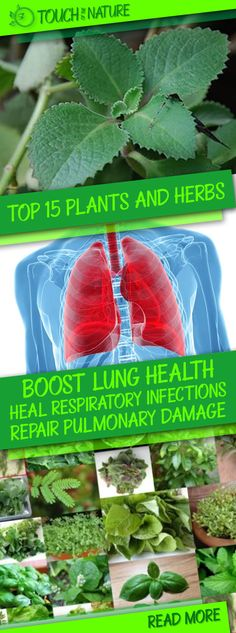 Here are the top 15 herbal remedies that can boost lung health naturally: