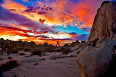 Joshua Tree National Park-Been There(: I want to see the sunset there though(: