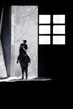 www.pegasebuzz.com | Equestrian photography : Anna Attlid