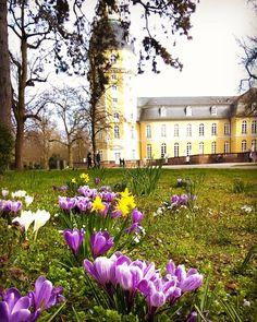 Ab heute ist es offiziell #Frühling! Die Sonne und die warmen Temperaturen haben wir schon bestellt  habt noch einen schönen Sonntagabend!  #visitbawu #visitkarlsruhe #karlsruhe #spring #travel #travelblog #castle #schloss #nature #flower #love #amazing #instalike #picture #bestoftheday #placetobw #bwjetzt #sunday #germany