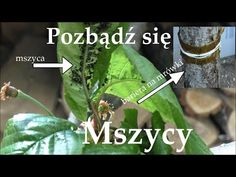 Balcony Garden, Science And Technology, The Creator, Make It Yourself, Youtube, Plants, Wifi, Gardens, Tips