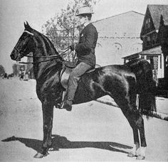 The American Saddlebred horse played a large part in the development of American history & they gained fame as a breed for their exceptional service during the US Civil War.