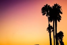 Venice beach palm trees at sunset hd photo by stuart guest-s Tropic Pictures, Sunrise Pictures, Sunset Photos, Sunset Captions For Instagram, Photo Instagram, Instagram Ideas, Instagram Fashion, Summer Pictures, Beach Pictures